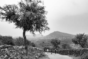 cecfee-udaipur-28
